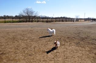 安比奈親水公園ドッグランで遊ぶ
