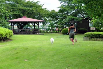 芝生広場で犬の散歩