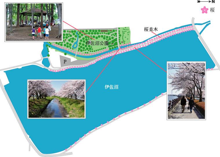 伊佐沼の桜マップ