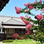 本丸御殿 中庭の百日紅