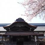 本丸御殿と桜