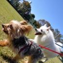 笠幡公園で犬の散歩