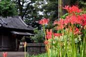 仙波の氷川神社と富士見橋