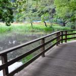 仙波河岸史跡公園の水辺