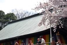 本堂から桜をパチリ