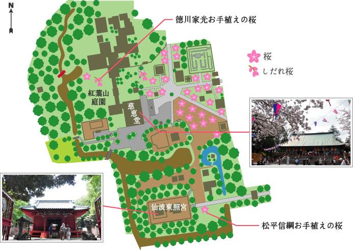 喜多院の桜マップ