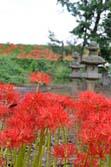氷川神社と彼岸花
