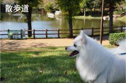 御伊勢塚公園 犬の散歩