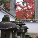 松平大和守家廟所の紅葉