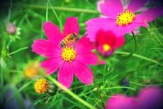 蜂もひと休憩