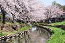 川岸でのんびり桜鑑賞