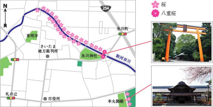新河岸川の桜並木マップ
