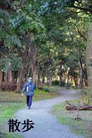 自然林遊歩道