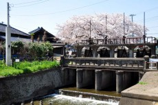 桜の季節は最高